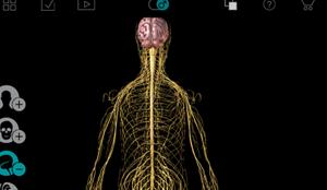 身体の構造
